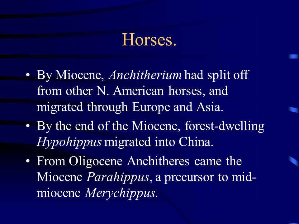 Horses.Merychippus is first grazer horse.