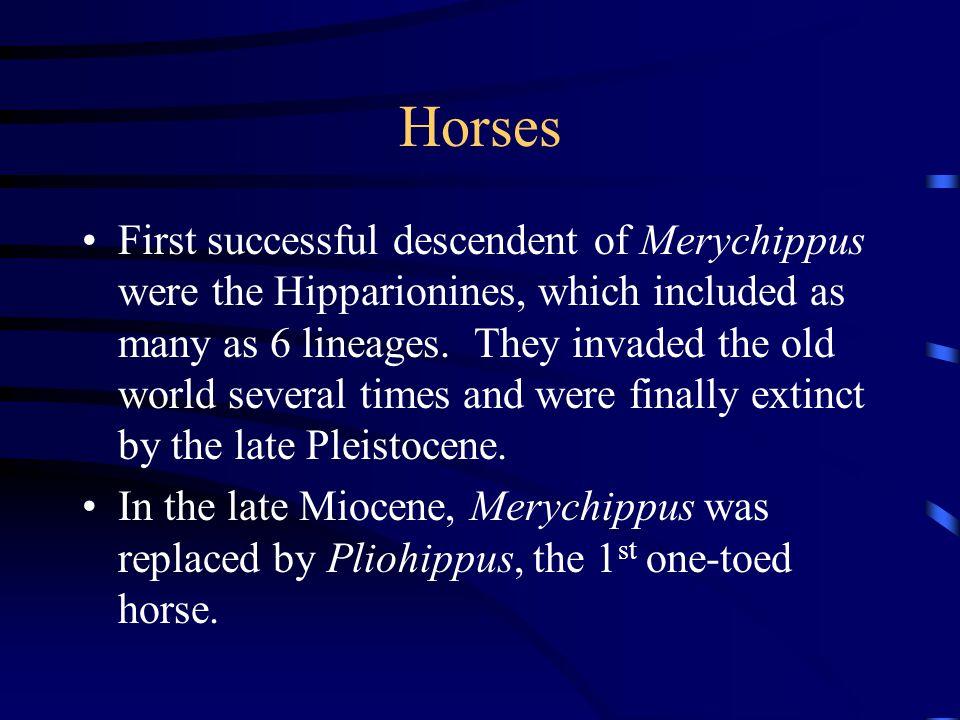 Horses Pliohippus gave rise to Equus during the Pleistocene of N.