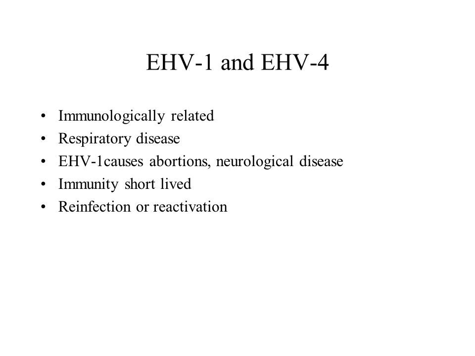 EHV-1 and EHV-4 Immunologically related Respiratory disease EHV-1causes abortions, neurological disease Immunity short lived Reinfection or reactivation