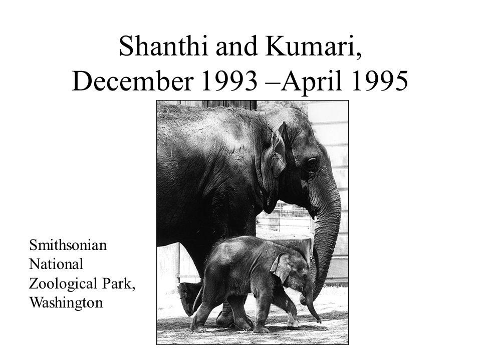 The elephant herpesvirus Richman et al. 1999. Science 283:1171