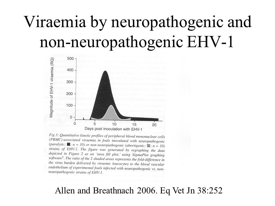 Viraemia by neuropathogenic and non-neuropathogenic EHV-1 Allen and Breathnach 2006.