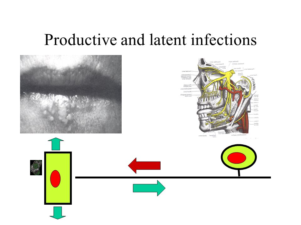 Productive and latent infections