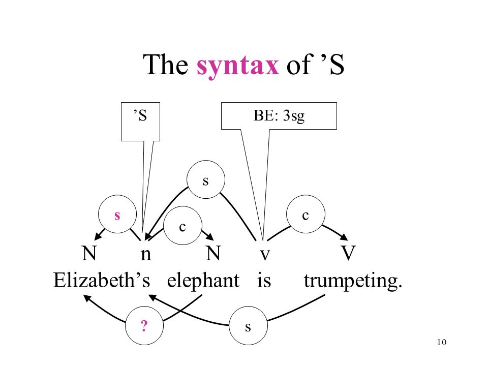 10 The syntax of 'S Elizabeth's elephant is trumpeting. N n N v V s s c c s BE: 3sg'S