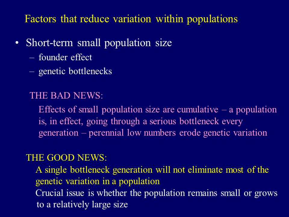 Factors that reduce variation within populations Short-term small population size –founder effect –genetic bottlenecks THE BAD NEWS: Effects of small population size are cumulative – a population is, in effect, going through a serious bottleneck every generation – perennial low numbers erode genetic variation THE GOOD NEWS: A single bottleneck generation will not eliminate most of the genetic variation in a population Crucial issue is whether the population remains small or grows to a relatively large size