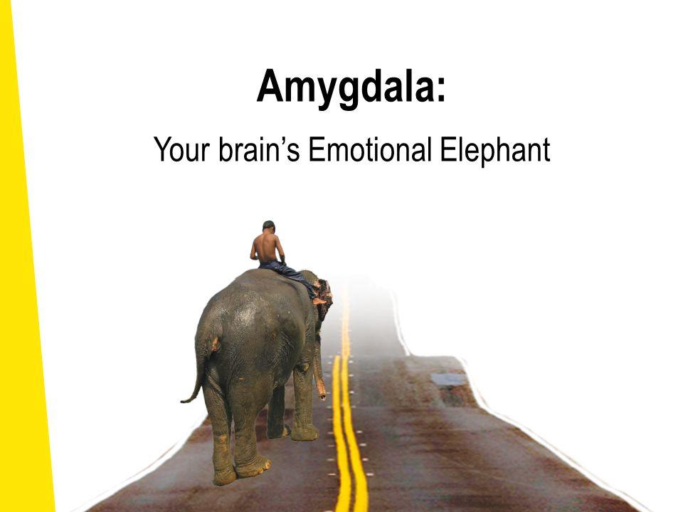 Amygdala: Your brain's Emotional Elephant Giuseppe Arcimboldo (1593, Italy)
