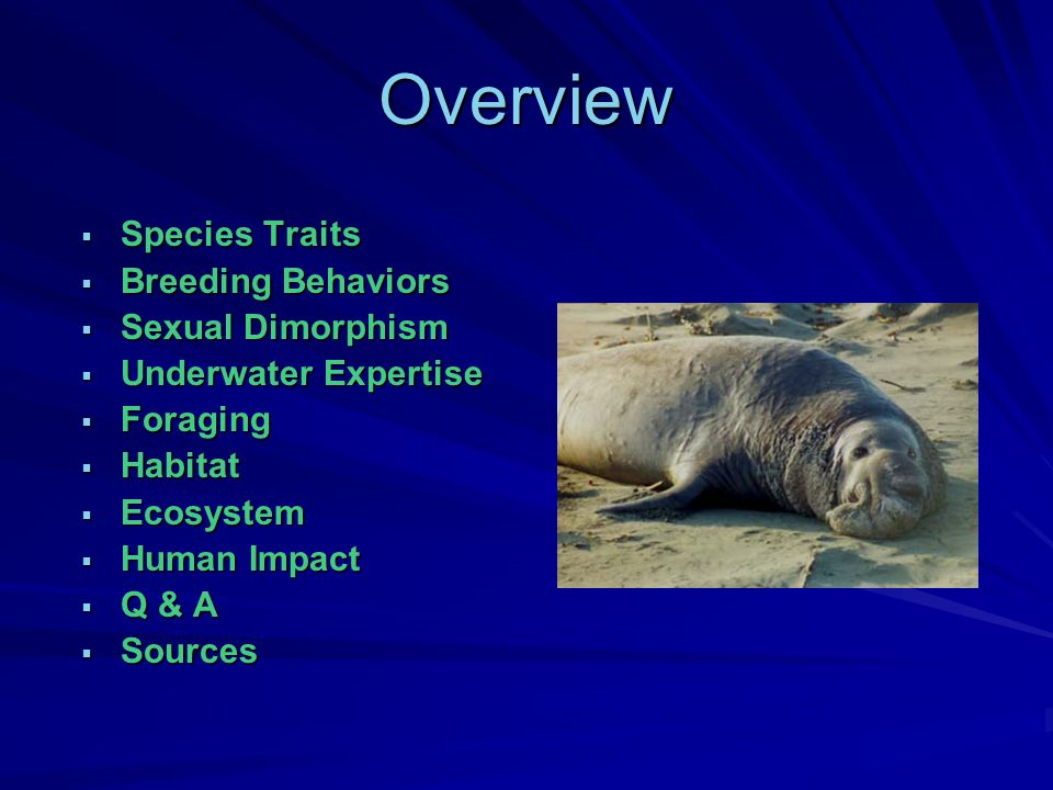 Overview  Species Traits  Breeding Behaviors  Sexual Dimorphism  Underwater Expertise  Foraging  Habitat  Ecosystem  Human Impact  Q & A  Sources