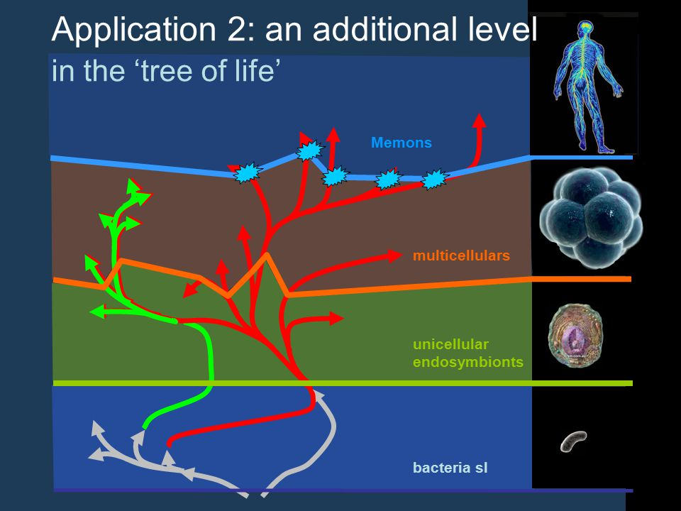 multicellulars Memons unicellular endosymbionts bacteria sl Application 2: an additional level in the 'tree of life'