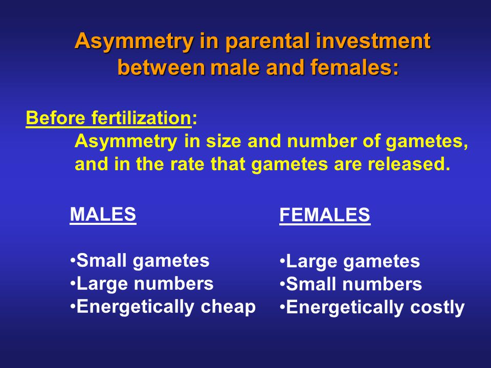 Asymmetry in parental investment between male and females: between male and females: Before fertilization: Asymmetry in size and number of gametes, and in the rate that gametes are released.
