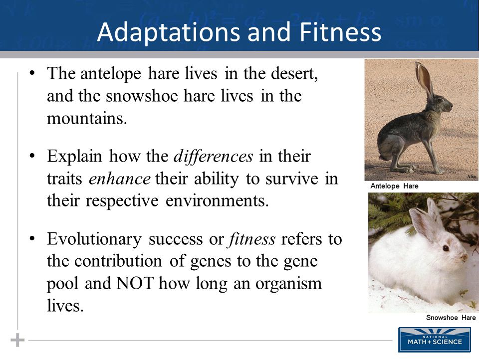 Adaptations and Fitness The antelope hare lives in the desert, and the snowshoe hare lives in the mountains. Explain how the differences in their trai