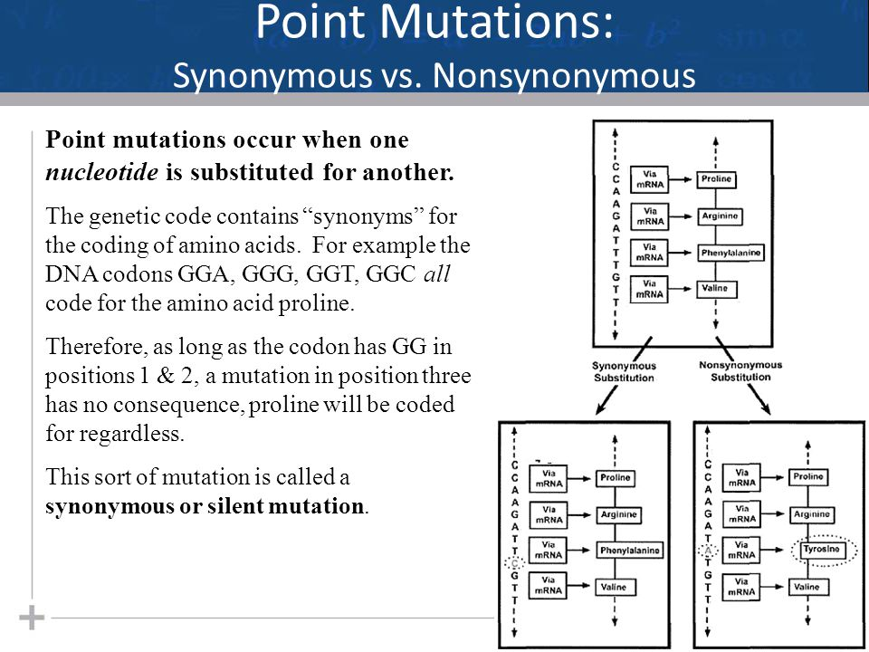 "Point Mutations: Synonymous vs. Nonsynonymous 20 Point mutations occur when one nucleotide is substituted for another. The genetic code contains ""syno"