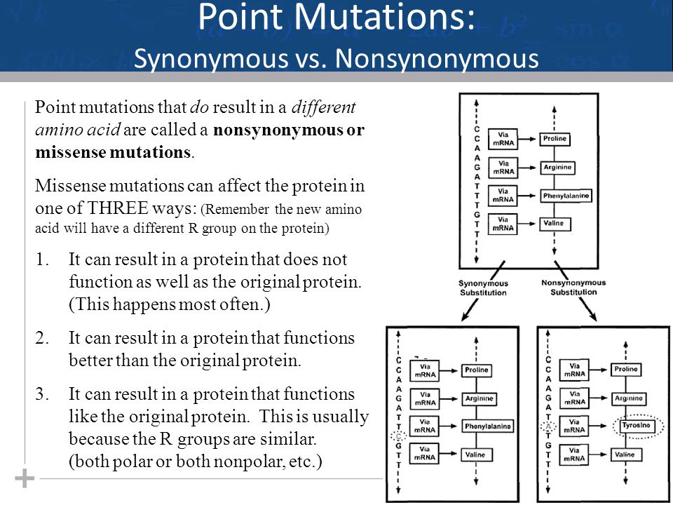 Point Mutations: Synonymous vs. Nonsynonymous 21 Point mutations that do result in a different amino acid are called a nonsynonymous or missense mutat