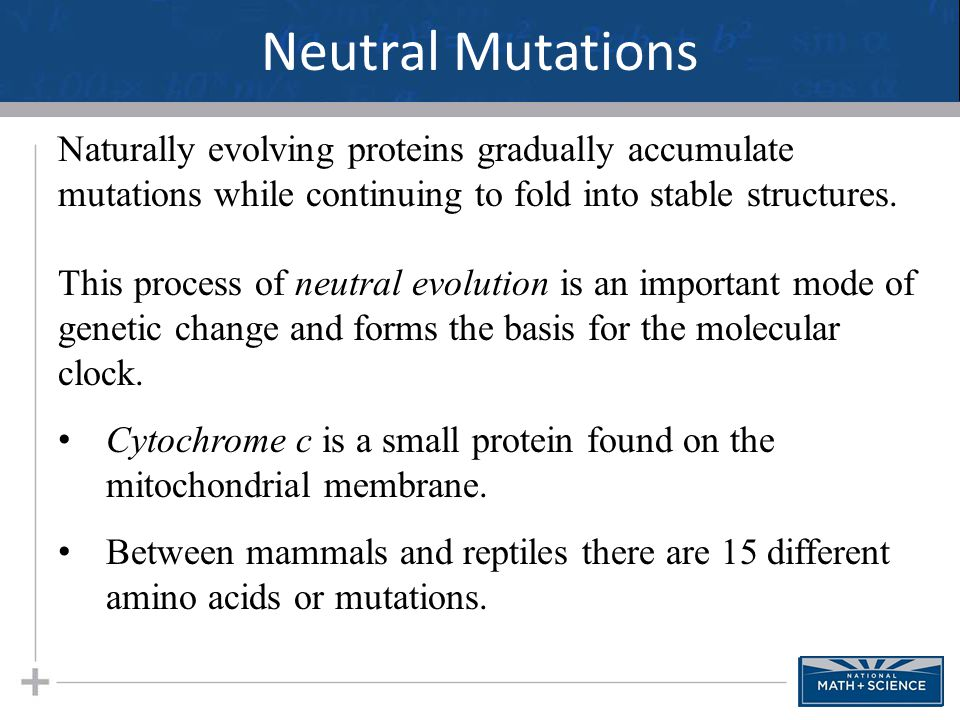 Neutral Mutations 23 Naturally evolving proteins gradually accumulate mutations while continuing to fold into stable structures. This process of neutr
