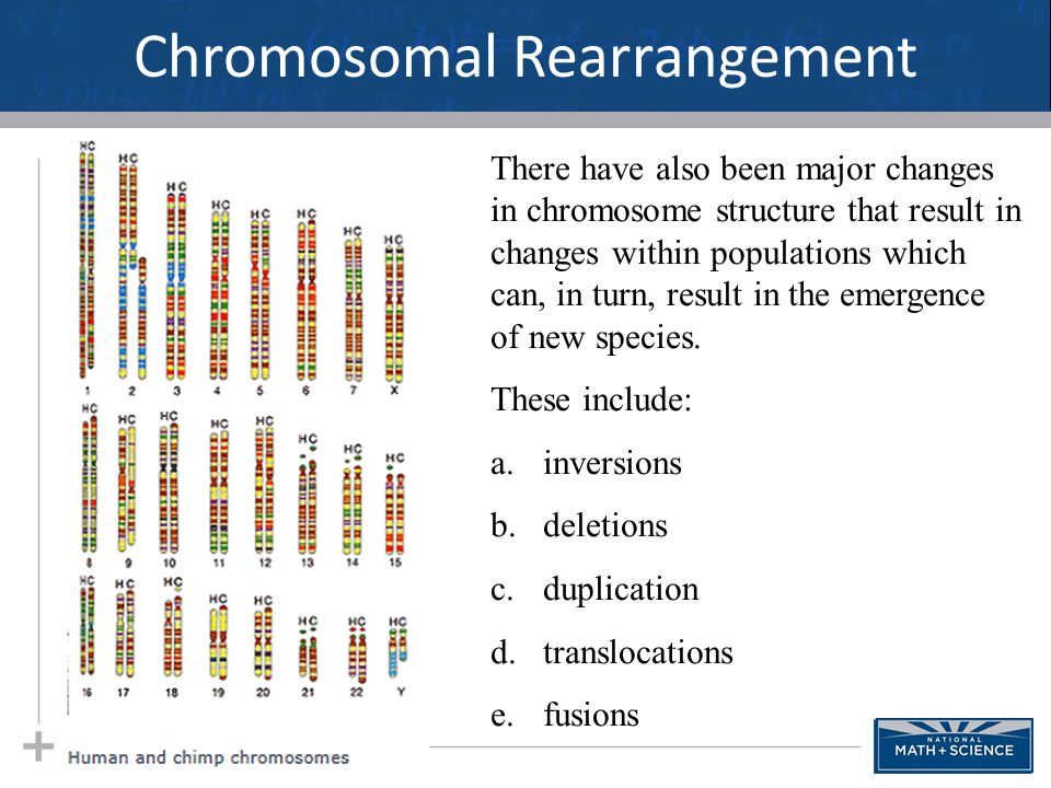 Chromosomal Rearrangement 31 There have also been major changes in chromosome structure that result in changes within populations which can, in turn,