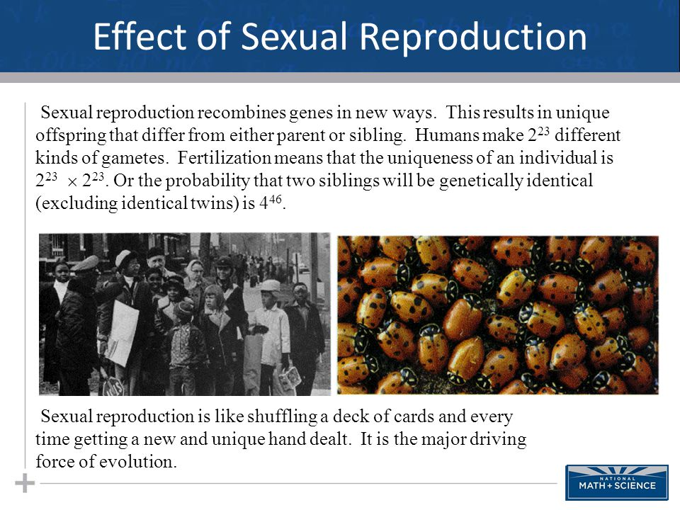 Effect of Sexual Reproduction 39 Sexual reproduction recombines genes in new ways. This results in unique offspring that differ from either parent or
