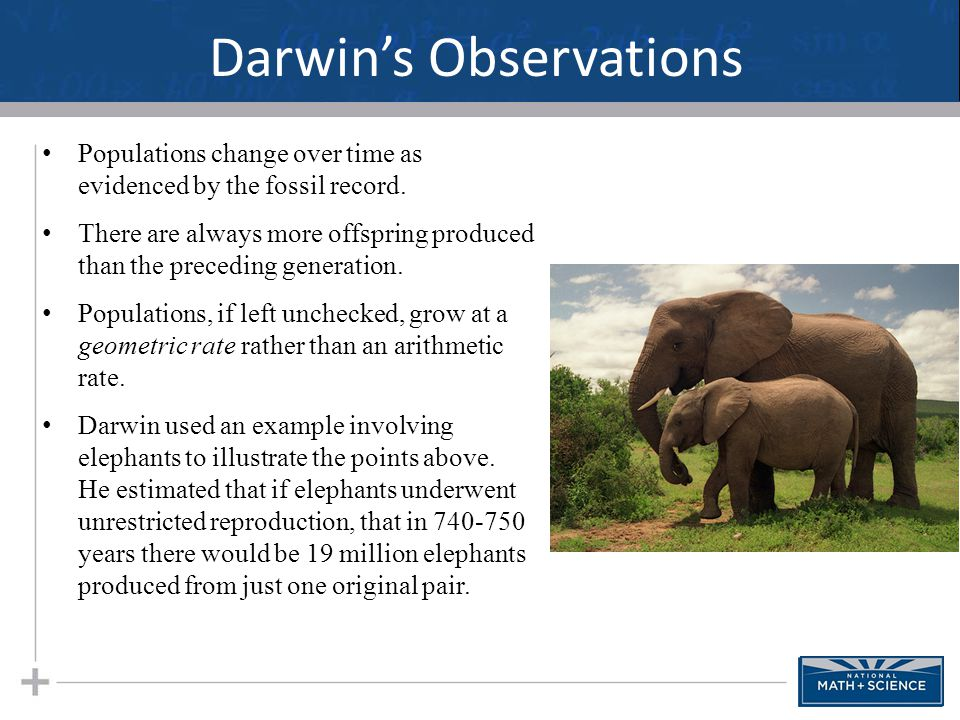Darwin's Observations Populations change over time as evidenced by the fossil record. There are always more offspring produced than the preceding gene