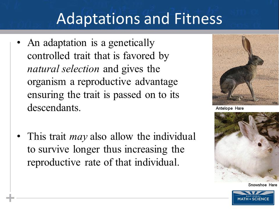 Adaptations and Fitness The antelope hare lives in the desert, and the snowshoe hare lives in the mountains.