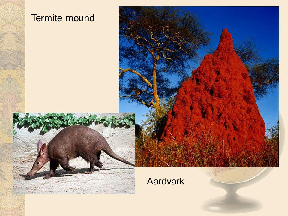 Termite mound Aardvark