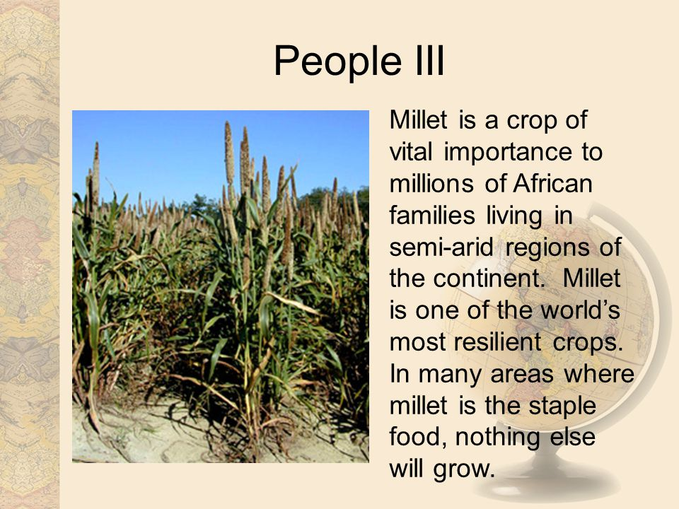 People III Millet is a crop of vital importance to millions of African families living in semi-arid regions of the continent.