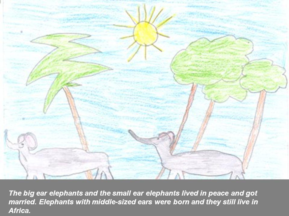 Gli elefanti con le orecchie grandi e gli elefanti con le orecchie piccole vissero in pace e si sposarono tra di loro.