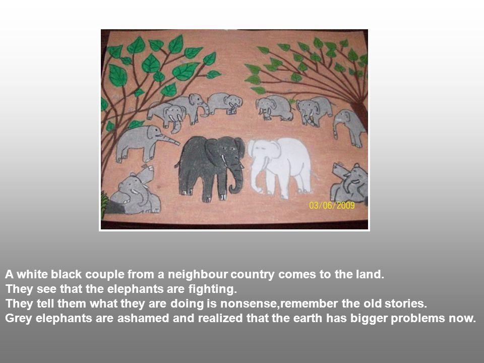 Komşu ülkeden gelen ziyaretçi bir çift beyaz siyah fil gri filleri kavga ederken görmüş.