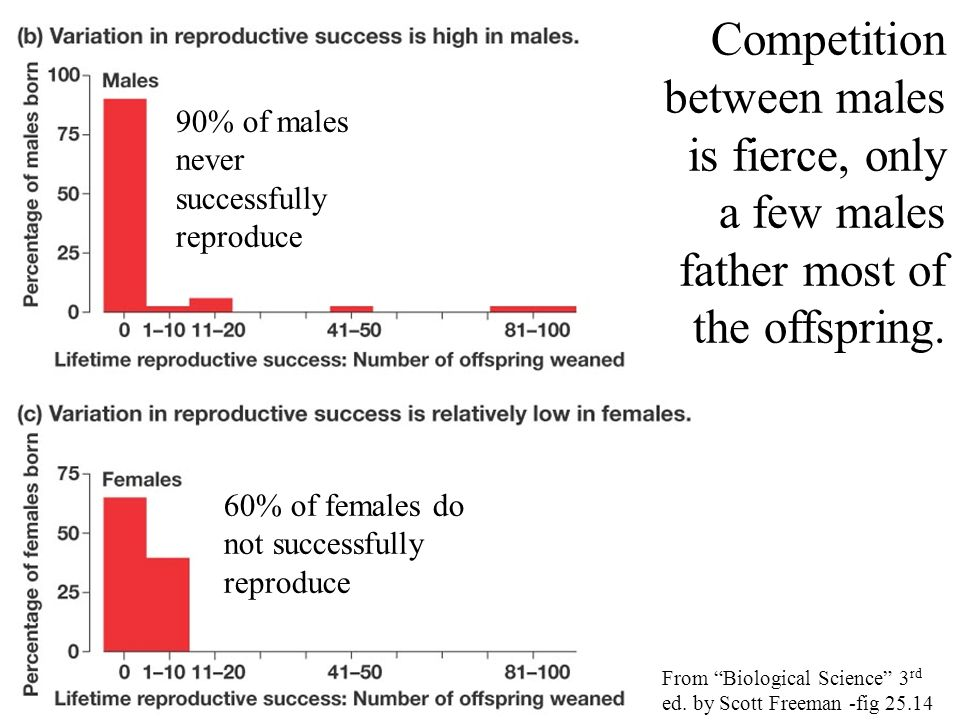 Competition between males is fierce, only a few males father most of the offspring. 90% of males never successfully reproduce 60% of females do not su