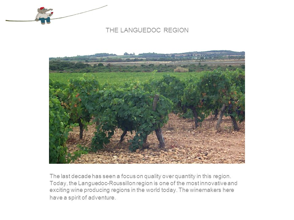 THE LANGUEDOC REGION The Languedoc region reaches from the Pyrenees to the Mediterranean Sea, and is home to many appellations.
