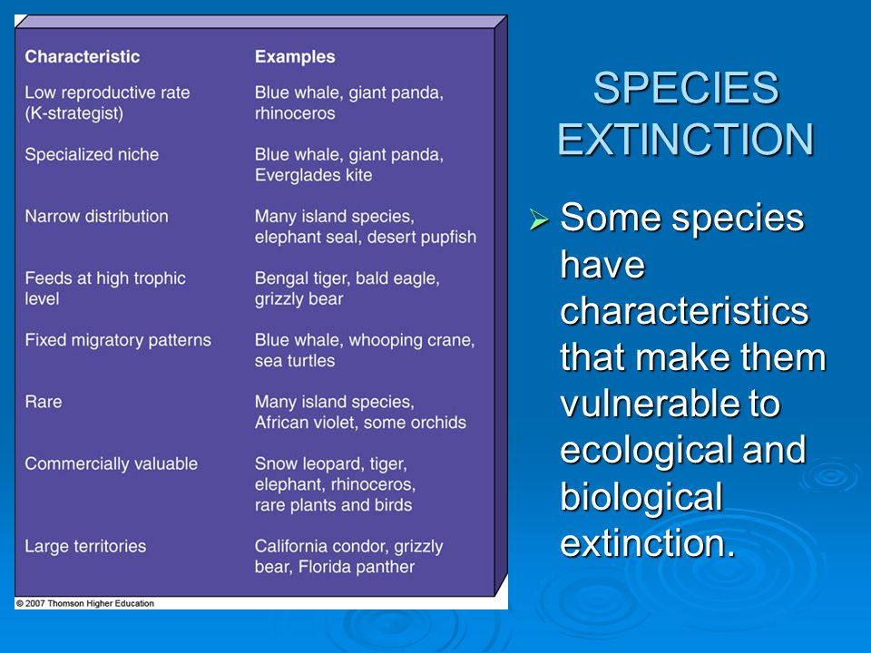 Some species have characteristics that make them vulnerable to ecological and biological extinction.