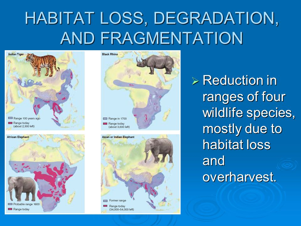 HABITAT LOSS, DEGRADATION, AND FRAGMENTATION  Reduction in ranges of four wildlife species, mostly due to habitat loss and overharvest.