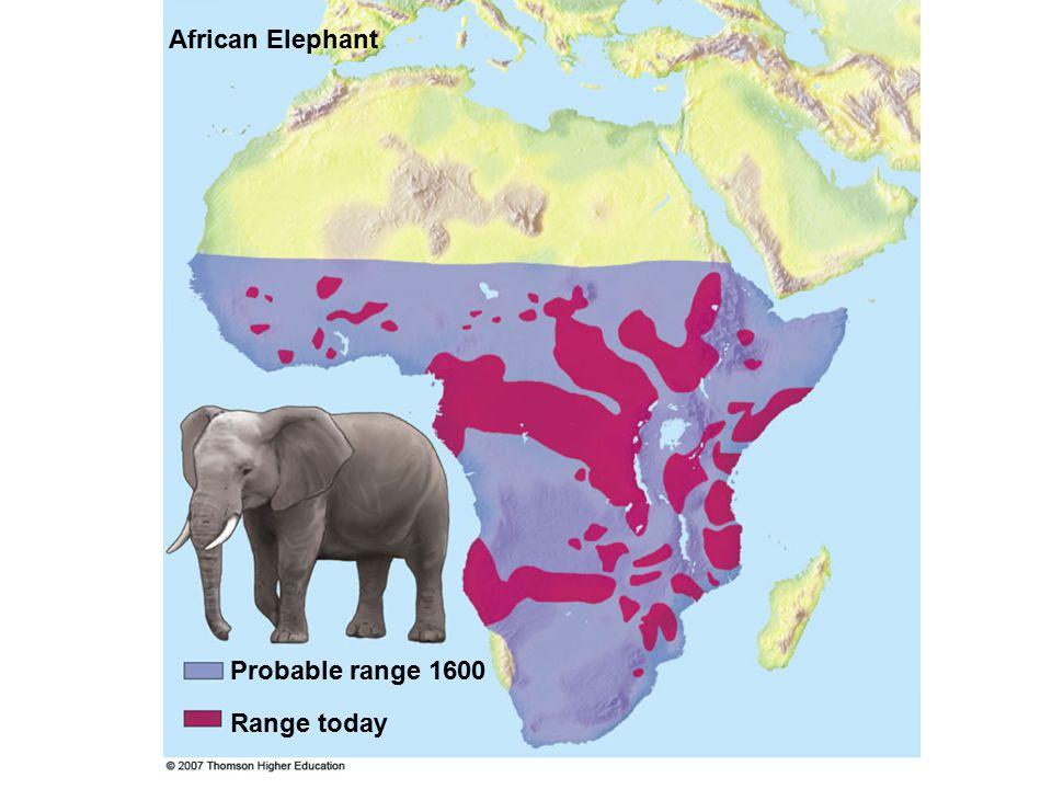 Probable range 1600 African Elephant Range today