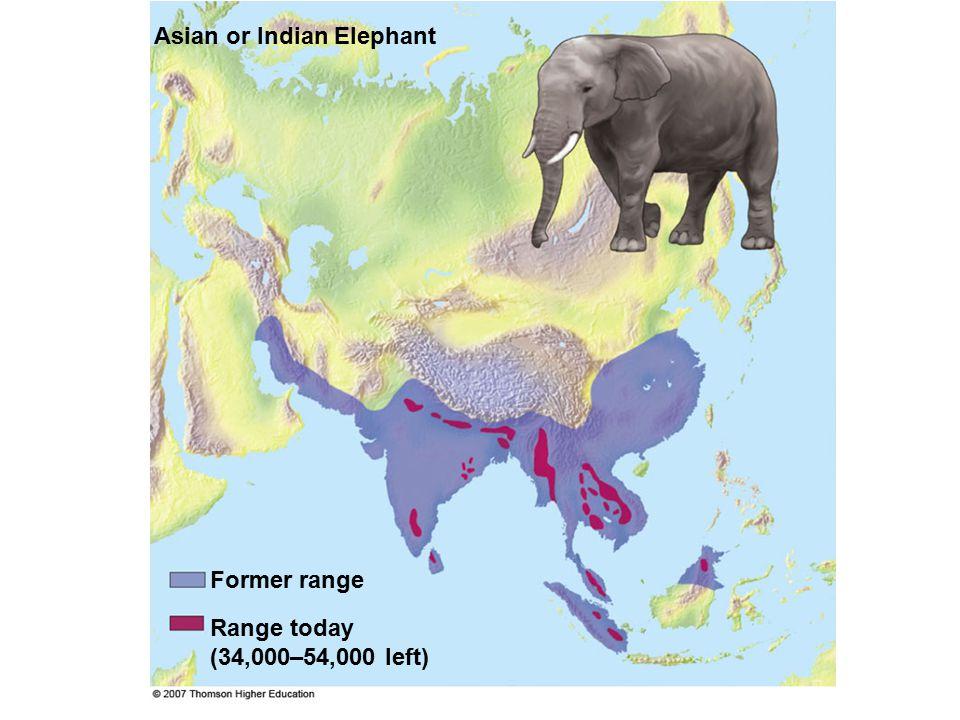 (34,000–54,000 left) Asian or Indian Elephant Former range