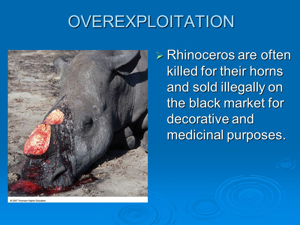 OVEREXPLOITATION  Rhinoceros are often killed for their horns and sold illegally on the black market for decorative and medicinal purposes.