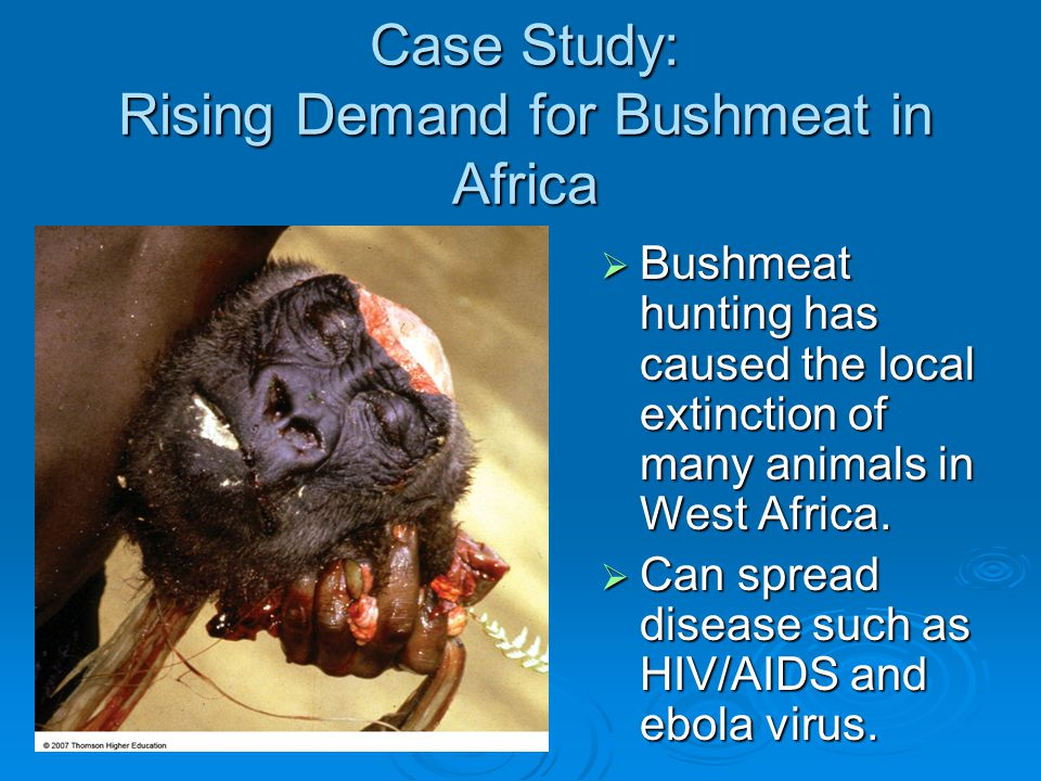 Case Study: Rising Demand for Bushmeat in Africa  Bushmeat hunting has caused the local extinction of many animals in West Africa.  Can spread disea