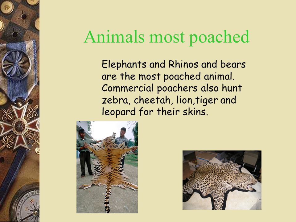 Animals most poached Elephants and Rhinos and bears are the most poached animal.