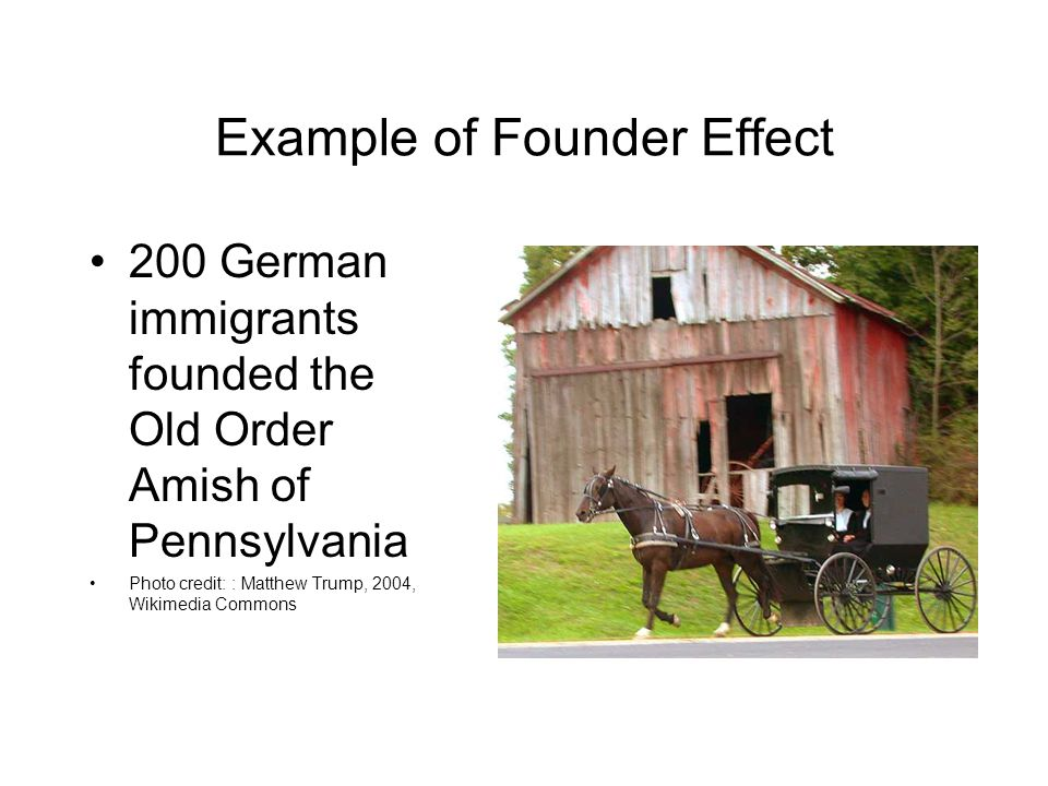 Example of Founder Effect 200 German immigrants founded the Old Order Amish of Pennsylvania Photo credit: : Matthew Trump, 2004, Wikimedia Commons