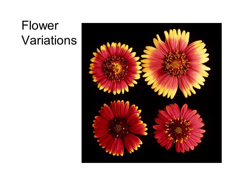Flower Variations