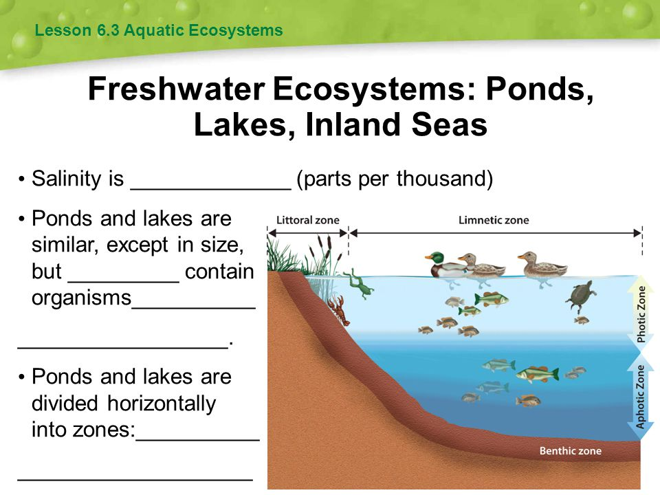 Freshwater Ecosystems: Ponds, Lakes, Inland Seas Lesson 6.3 Aquatic Ecosystems Salinity is _____________ (parts per thousand) Ponds and lakes are simi