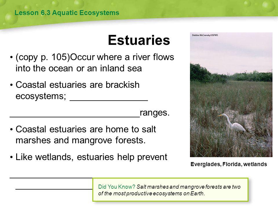 Estuaries Lesson 6.3 Aquatic Ecosystems (copy p. 105)Occur where a river flows into the ocean or an inland sea Coastal estuaries are brackish ecosyste