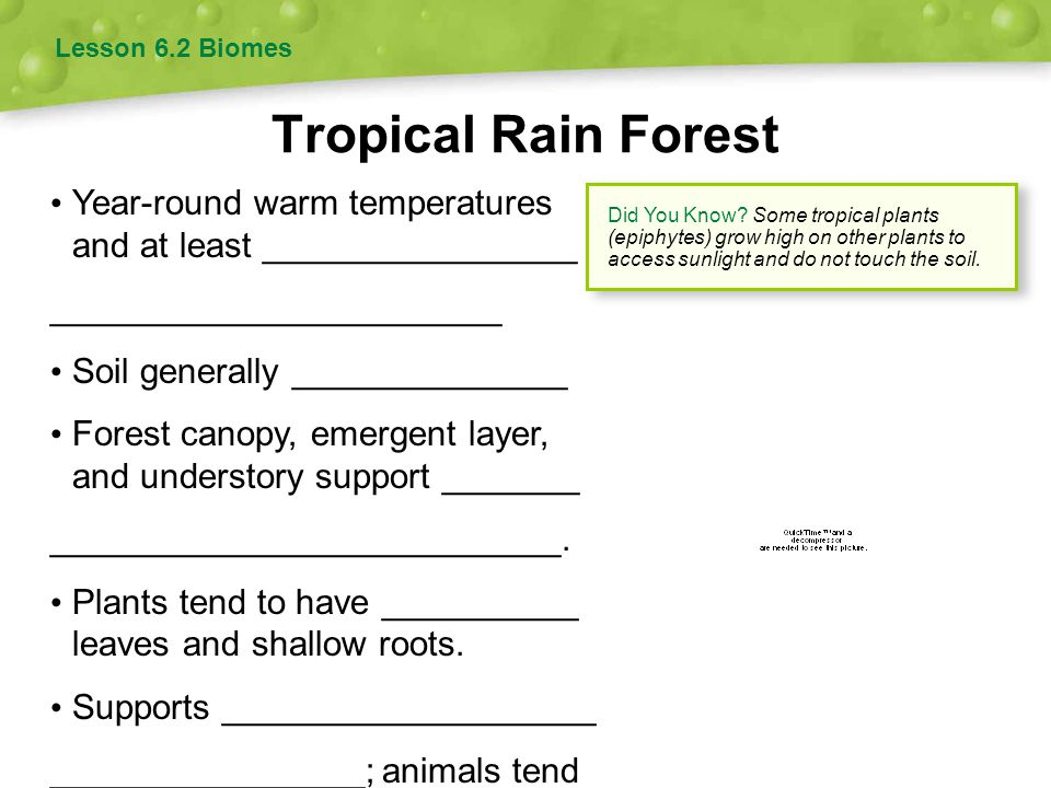 Tropical Rain Forest Lesson 6.2 Biomes Year-round warm temperatures and at least ________________ _______________________ Soil generally _____________