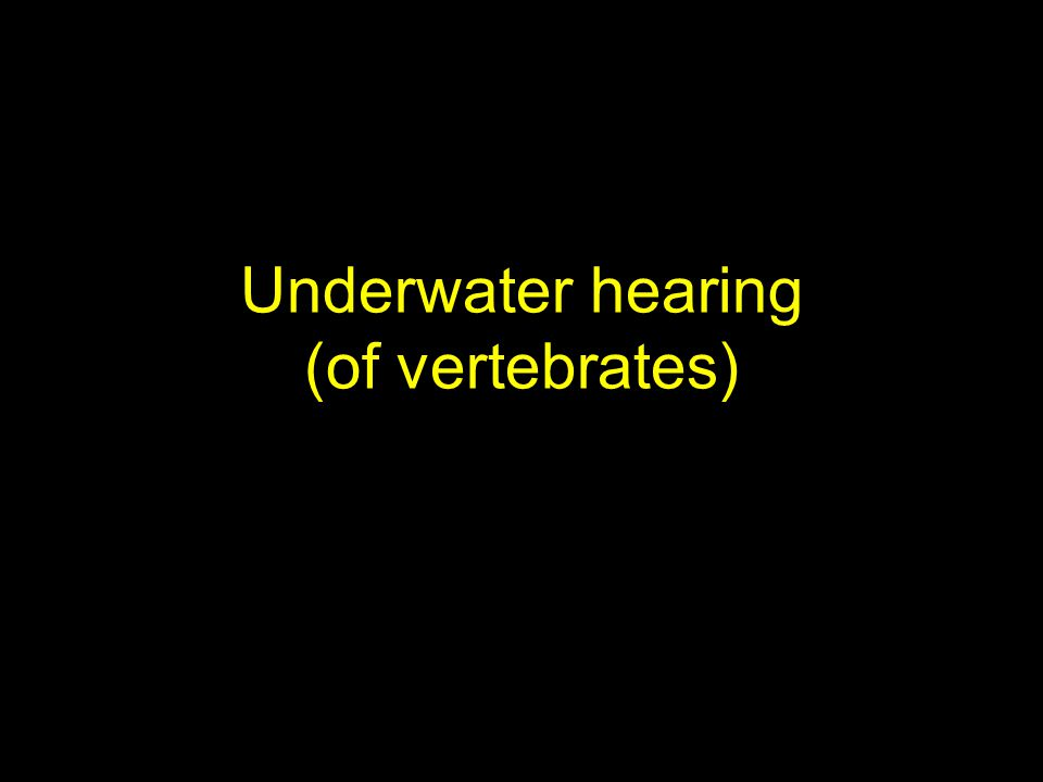 Underwater hearing (of vertebrates)