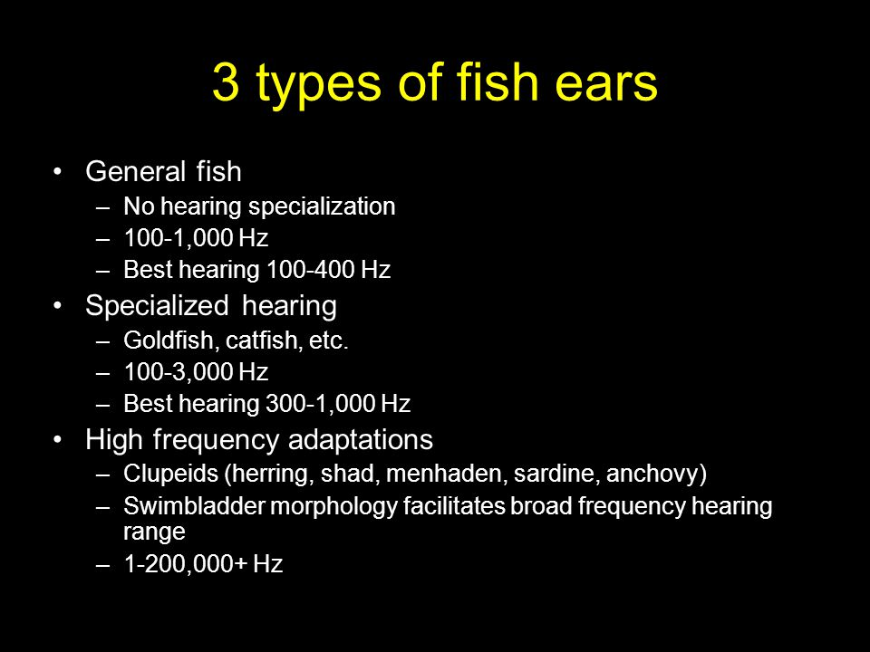 3 types of fish ears General fish –No hearing specialization –100-1,000 Hz –Best hearing 100-400 Hz Specialized hearing –Goldfish, catfish, etc.