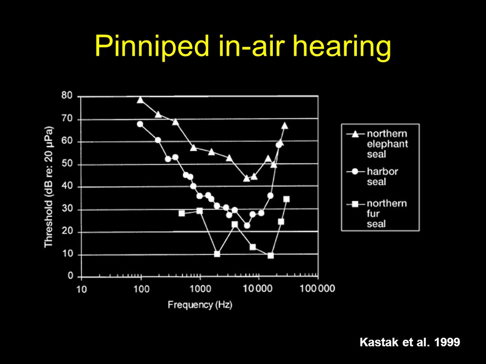 Pinniped in-air hearing Kastak et al. 1999