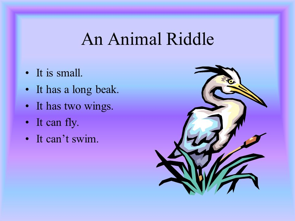 D. Task (Writing animal riddles ) Ask pupils to write an animal riddle.