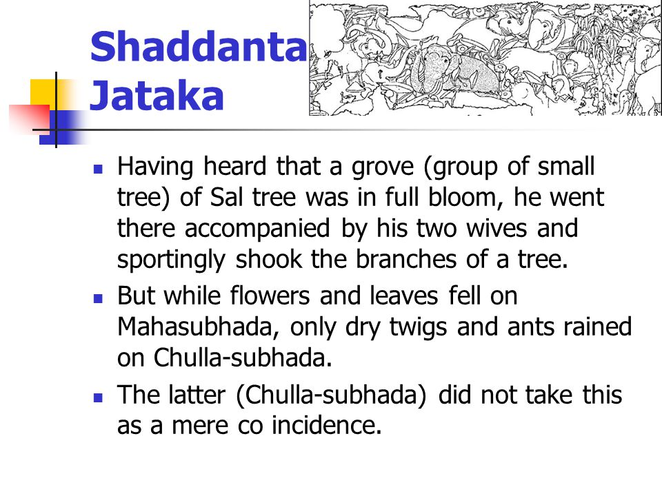 Shaddanta- Jataka Having heard that a grove (group of small tree) of Sal tree was in full bloom, he went there accompanied by his two wives and sportingly shook the branches of a tree.