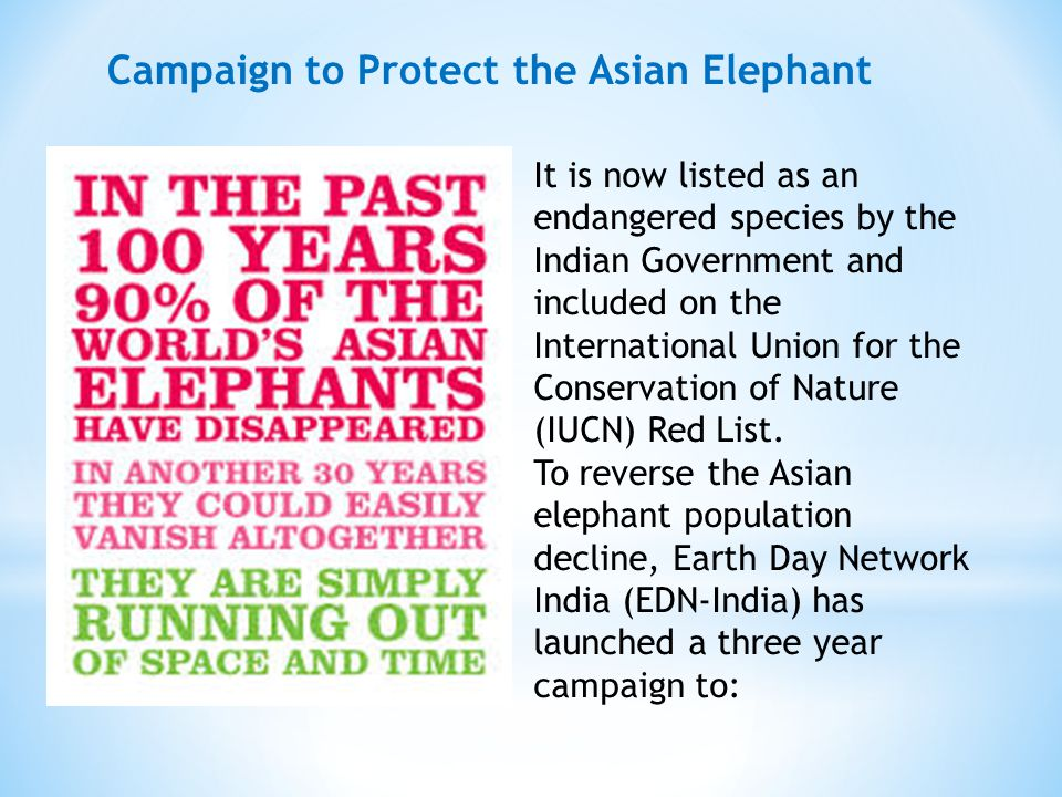 It is now listed as an endangered species by the Indian Government and included on the International Union for the Conservation of Nature (IUCN) Red List.