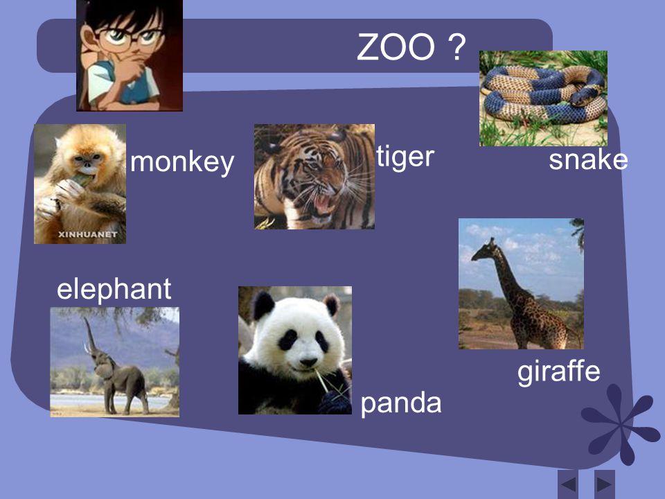 ZOO monkey tiger snake elephant giraffe panda