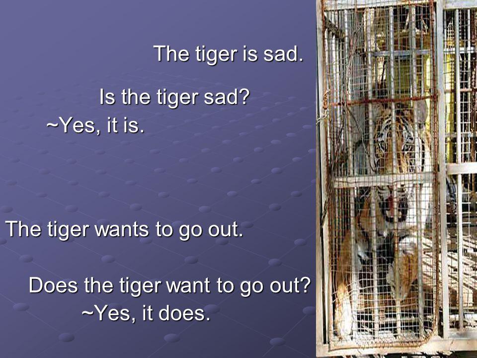 The tiger is sad. Is the tiger sad. Is the tiger sad.