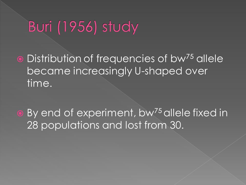  Distribution of frequencies of bw 75 allele became increasingly U-shaped over time.
