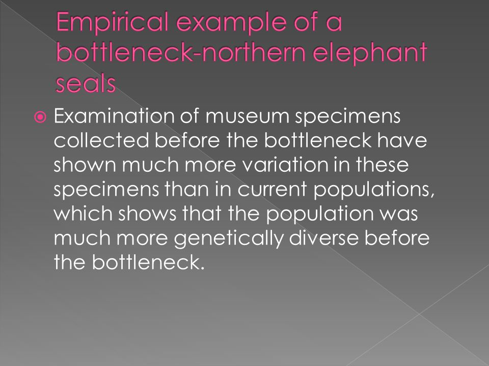  Examination of museum specimens collected before the bottleneck have shown much more variation in these specimens than in current populations, which shows that the population was much more genetically diverse before the bottleneck.