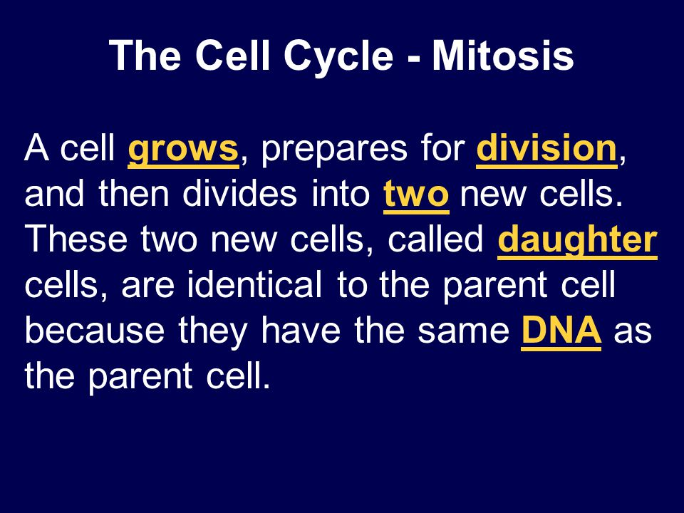 The Cell Cycle - Mitosis A cell grows, prepares for division, and then divides into two new cells. These two new cells, called daughter cells, are ide