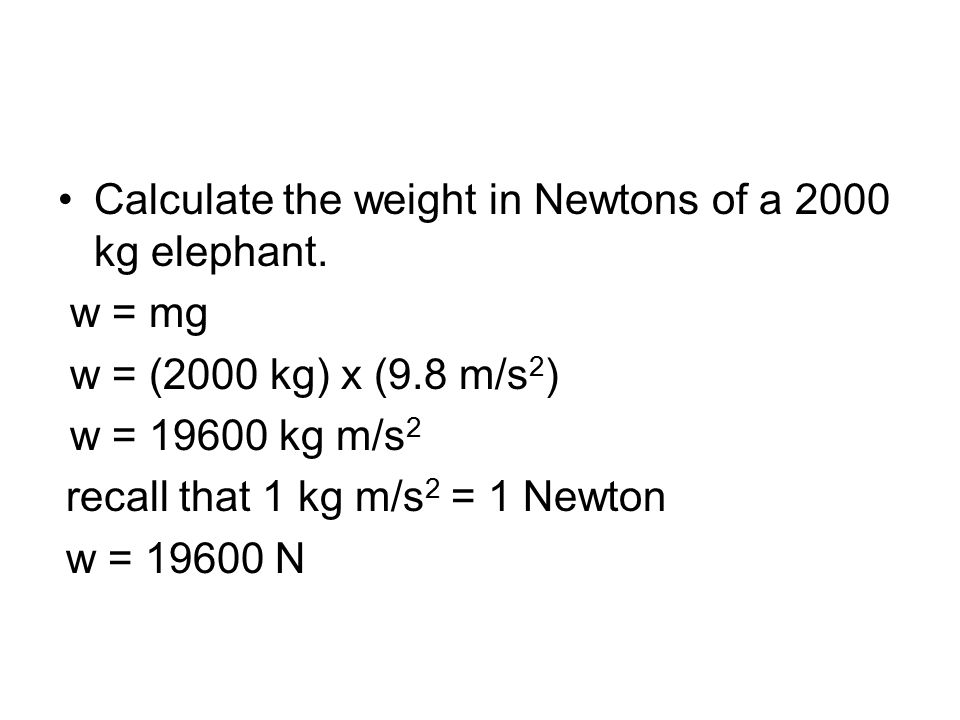 Calculate the weight in Newtons of a 2000 kg elephant.